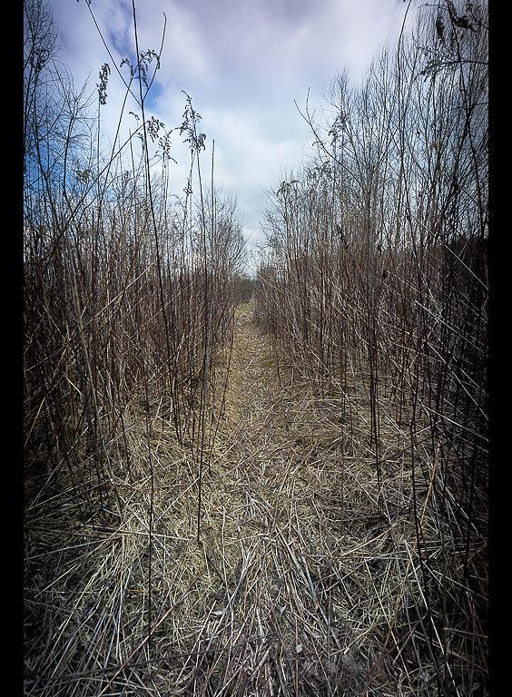 Pathway-II-700.JPG